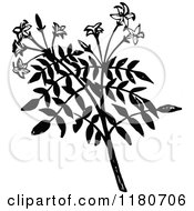 Clipart Of A Retro Vintage Black And White Jasmine Branch Royalty Free Vector Illustration
