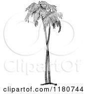 Retro Vintage Black And White Palm Trees