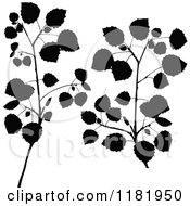 Clipart Of Black Silhouetted Birch Branches Royalty Free Vector Illustration
