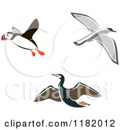 Clipart Of Flying Puffin Albatross And Petrel Birds Royalty Free Vector Illustration by Vector Tradition SM