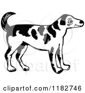 Black And White Standing Dog 2