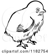 Clipart Of A Black And White Chick Royalty Free Vector Illustration by Prawny