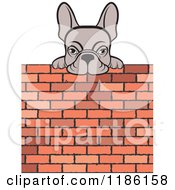 Clipart Of A Frenchie Dog Looking Over A Brick Wall Royalty Free Vector Illustration