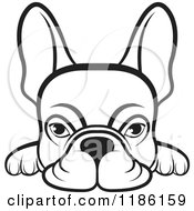 Clipart Of A Black And White Frenchie Dog Looking Over A Surface Royalty Free Vector Illustration by Lal Perera #COLLC1186159-0106