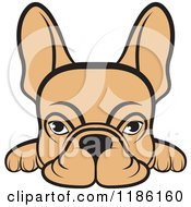 Clipart Of A Fawn Frenchie Dog Looking Over A Surface Royalty Free Vector Illustration