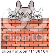 Clipart Of Three Frenchie Bulldogs Looking Over A Brick Wall Royalty Free Vector Illustration