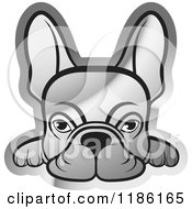 Clipart Of A Silver Frenchie Dog Looking Over A Surface Royalty Free Vector Illustration