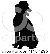 Cartoon Of A Black Silhouette Of A Poodle Sitting Royalty Free Vector Clipart by Maria Bell