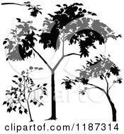 Clipart Of Silhouetted Branches And Trees Royalty Free Vector Illustration