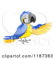 Cartoon Of A Presenting Blue And Yellow Macaw Parrot Royalty Free Vector Clipart