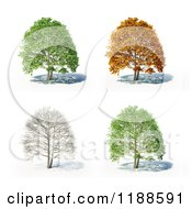Clipart Of A 3d Tree In Different Seasons On White Royalty Free CGI Illustration