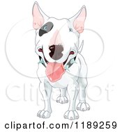 Cartoon Of A Happy White Bull Terrier Dog With A Black Spot Around His Eye And A Spiked Collar Royalty Free Vector Clipart