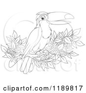 Cartoon Of A Happy Outlined Toucan Bird On A Branch Royalty Free Vector Clipart by Alex Bannykh