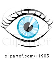 Blue Human Eye And Eyelashes Clipart Illustration
