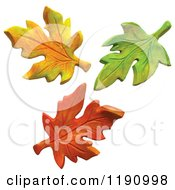 Yellow Green And Orange Autumn Leaves Over White