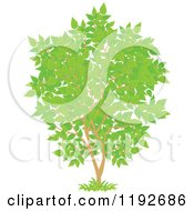 Cartoon Of A Tree With Green Leaves Royalty Free Vector Clipart
