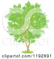 Cartoon Of A Tree With Gree Leaves 2 Royalty Free Vector Clipart