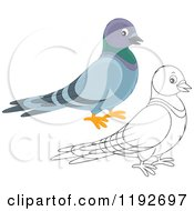 Cartoon Of A Cute Happy Pigeon In Color And Outline Royalty Free Vector Clipart