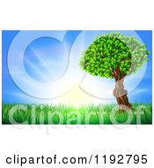 Cartoon Of A Lush Tree And Grass At Sunrise Royalty Free Vector Clipart