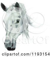 Clipart Of A White Horse Head Royalty Free Vector Illustration