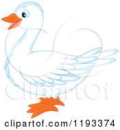 Cute White Duck Or Goose In Profile
