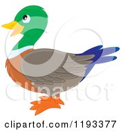 Cartoon Of A Cute Mallard Duck In Profile Royalty Free Vector Clipart by Alex Bannykh