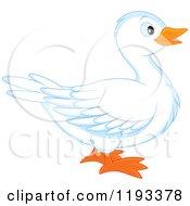 Cute White Duck In Profile