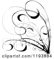 Clipart Of A Black And White Scrolling Vine And Tendrils Royalty Free Vector Illustration by dero