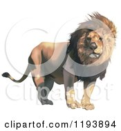 Clipart Of A Male Lion With A Breeze Through His Mane Royalty Free Vector Illustration by dero