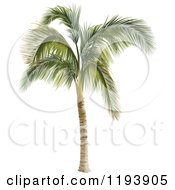 Clipart Of A 3d Palm Tree Royalty Free Vector Illustration by dero