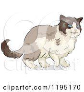 Cartoon Of A Cute Ragdoll Cat With Blue Eyes Royalty Free Vector Clipart