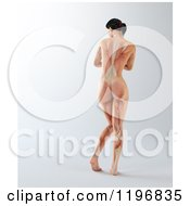 Clipart Of A Rear View Of A 3d Nude Woman With Visible Muscles On Gray Royalty Free CGI Illustration