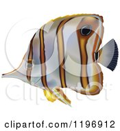Clipart Of A Copperband Butterflyfish Royalty Free Vector Illustration