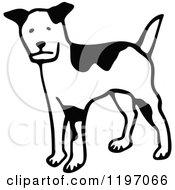 Black And White Alert Dog