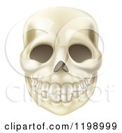 Cartoon Of A Smiling Human Skull Royalty Free Vector Clipart by AtStockIllustration
