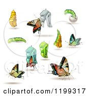 Clipart Of Stages Of The Butterfly From Cocoon To Adult Royalty Free Vector Illustration by merlinul