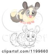 Cartoon Of A Colored And Line Art Cute Chinchilla Royalty Free Clipart by Alex Bannykh