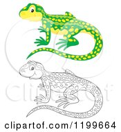 Cartoon Of A Colored And Line Art Cute Newt Royalty Free Clipart by Alex Bannykh