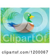 Cartoon Of A Cute Mallard Duck Drake Floating On A Pond Royalty Free Vector Clipart