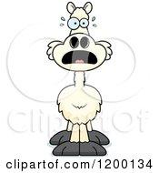 Scared Llama