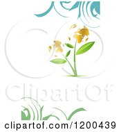 Plant With Golden Globe Flowers Over White With Swirls And Copyspace