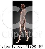 Clipart Of A 3d Walking Female Medical Model With Visible Leg Bones On Black Royalty Free CGI Illustration by KJ Pargeter