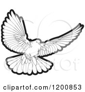 Black And White Dove Flying