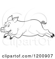 Cartoon Of A Black And White Outlined Running Pig Royalty Free Vector Clipart