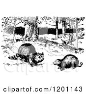 Clipart Of A Vintage Black And White Raccoon And Possum Royalty Free Vector Illustration