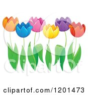Cartoon Of Colorful Tulip Flowers And Green Leaves Royalty Free Vector Clipart
