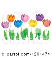 Cartoon Of Colorful Tulip Flowers And Green Leaves 2 Royalty Free Vector Clipart by visekart