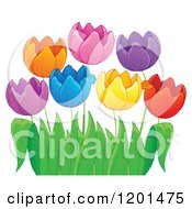 Cartoon Of Colorful Tulip Flowers And Green Leaves 3 Royalty Free Vector Clipart by visekart