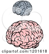 Gray And Pink Human Brains