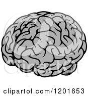 Gray Human Brain
